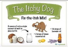Itchy dog needs Young Living essential Oils Essential Oils Dogs, Lemon Essential Oils, Young Living Essential Oils, Gato Gif, Oils For Dogs, Dog Itching, Dog Shampoo, Pet Health, Hair Health