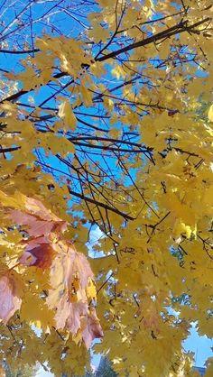 Autumn taken by #HTCOneX+