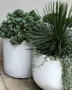 Pots are an excellent way to finish off your outdoor space. Keeping it simple can often be the most effective. Plants supplied by Pots by Image captured by ( ・・・ Big Indoor Plants, Patio Plants, Balcony Plants, Indoor Plant Pots, Outdoor Planters, Outdoor Gardens, Indoor Outdoor, Outdoor Potted Plants, Plant Texture