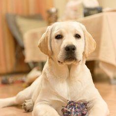 My dogs Labrador Retriever                                                                                                                                                                                 More