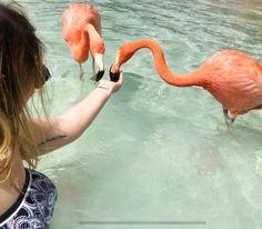 Seja sempre um flamingo em meio à um monte de pombas ✌ #aruba #flamingo - Giovana Quaglio Flamingo Beach Aruba, Instagram, Animals, Wanderlust, Middle, Travel, Amor, Animales, Animaux