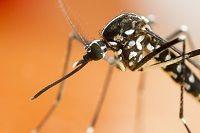 Aedes Aegypti — Portal da Câmara dos Deputados