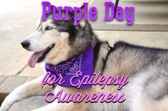 March 26th is #PurpleDay for Epilepsy Awareness. We are helping spread awareness about Canine Epilepsy. Read Gracie's Epi story on A Girl and Her Husky :