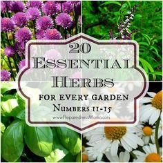 The Essential Herbs Series #11-15 | PreparednessMama