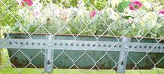 How to attach a flower box to a kennel fence I did this on all the kennel panels Animal Boarding, Pet Boarding, Flower Boxes, Flowers, Kennel Ideas, Dog Kennels, Fence, Landscaping, Decor Ideas