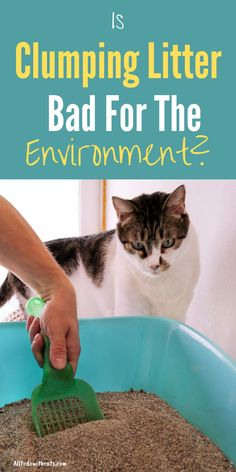 Is clumpimg cat litter safe to use and is it bad for the environment? Discover all about clumping litter and if it's right for you and your cat. #clumpingcatlitter #bestclumpingcatlitter #bestcatlitter #catlitterideas Best Cat Litter, Litter Box, Surface Mining, Compost Bags, How To Train Your, Cat Life, Cool Cats, Biodegradable Products