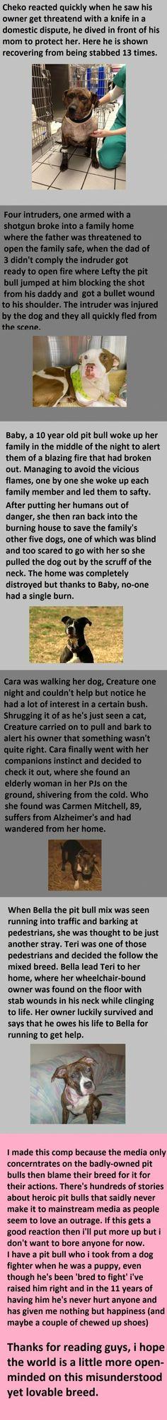 Warum man Hunde man einfach lieben muss - Win Bild | Webfail - Fail Bilder und Fail Videos