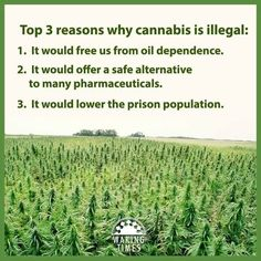 Top 3 reasons why cannabis is illegal: It would free us from oil dependence. It would offer a safe alternative to many pharmaceuticals. It would lower the prison population. Weed Facts, Marijuana Facts, Medical Marijuana, Cannabis, Self Medication, Weed Pictures, Smoking Weed, Science And Nature, Prison