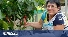 Úspěšná pěstitelka se silnými a kompaktními rostlinami paprik, jaké se jí Container Gardening, Pictures, Balcony, Container Garden