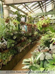 Plants in the plant house Plant Rooms, Room With Plants, Enclosed Porches, Room Screen, Sunrooms, Greenhouses, Atrium, Permaculture, Yard Art