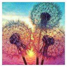 NEW Dandelion pictures of rhinestones Full drill Round Diamond Painting Cross Stitch DIY needlework Diamond Embroidery Foto Nature, Make A Wish, Belle Photo, Pretty Pictures, Beautiful World, Beautiful Things, Nature Photography, Scenery, Artwork