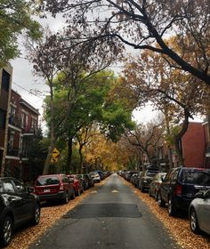 #montreal #automne #automn #fall Of Montreal, Quebec, Places To Visit, Sidewalk, Good Things, Fall Season, Quebec City, Side Walkway, Walkway