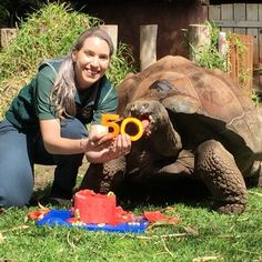 #Perth Zoo Galapagos tortoise Cerro celebrates 50th birthday, eats watermelon cake - ABC Online: ABC Online Perth Zoo Galapagos tortoise…