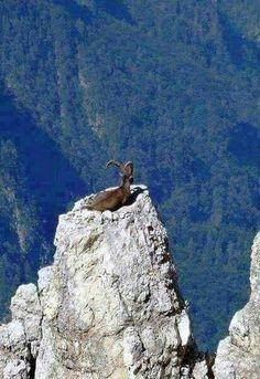 Porque me pertenece todo animal silvestre del bosque, las bestias sobre mil montañas. (Salmo 50:10) SB