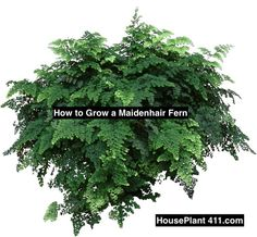 152380b59fb4aa9f64ea637106dc25a0 Palm Tree Rubber Plant House Identification on tropical house plant identification, bamboo house plant identification, ivy house plant identification,
