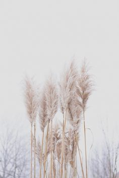 Who knew dried foliage could be so cool? Wheat, pampas grass and dried flowers are perfect for a Christmas-free, winter themed wedding. Grass Decor, Image Nature, No Rain, White Aesthetic, Graphic, Flower Power, Bloom, Pure Products, Photos