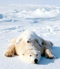 Polar Bear and Child