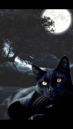 Black Cat Art, Black Cats, Amor Animal, Cute Animal Drawings Kawaii, Witch Cat, Cat Wallpaper, Warrior Cats, Beautiful Cats, Cat Memes