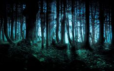 pictures of forests - Bing Images