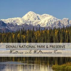 Tour Times: 6:30 AM and 8:00 AM  This Denali National Park tour departs from: McKinley Village Lodge, McKinley Chalet Resort, Denali Princess Wilderness Lodge and the Wilderness Access Center