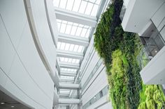 green wall   03-living-wall-interior-design-vancouver-green-wall.jpg
