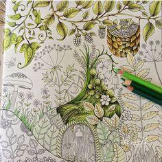 Enchanted Forest/WIP/Johanna Basford/ polychromos pencils/ colouring book/ Ness Butler/