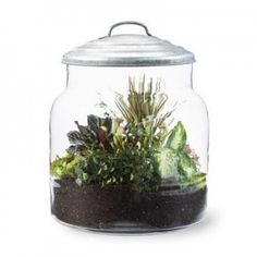 When set-up properly, these miniature gardens require minimal care.