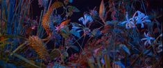 Have your mind blown by Hamill Industries' time-lapse video for Floating Points' track Last Bloom Pond Life, Colorful Plants, New Shows, Mind Blown, Bloom, Scene, Industrial, Film, Projection Mapping