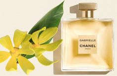 Chanel introduces new Gabrielle perfume to the world Chanel Perfume, Cosmetics & Perfume, Best Perfume, Perfume Scents, Fragrance Lotion, Perfume Bottles, Chanel Creme, Coco Chanel, Perfume Making