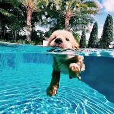 Dog Breeds Little .Dog Breeds Little Baby Animals Super Cute, Super Cute Puppies, Cute Little Puppies, Cute Dogs And Puppies, Cute Funny Animals, Baby Dogs, Doggies, Funny Puppies, Photos Of Puppies