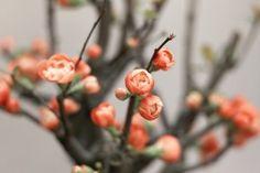 Lovely Flowers HD Wallpaper