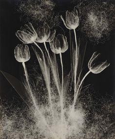 'Tulips', 1940 © Nojima Yasuzo. Foto Cortesía del The National Museum of Modern Art, Kyoto.