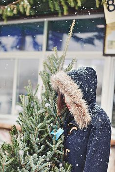 Buying the Christmas tree