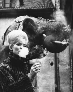 Elephant tamer Monique Holzmuller having a cigarette with one of her elephants. (Photo by Keystone/Getty Images). 1967