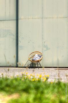 Customize your cushions with your photos - via Wild Birds Collective - #diy #photo #home #interiors #photoshoot