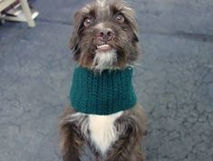 ★1/20/15 STILL THERE!!! PLEASE PIN LIKE CRAZY AND SAVE THIS DARLING LITTLE BOY! HE IS SO VERY, VERY SWEET!!!★Manhattan Center SHARMA - A1025343 MALE, BROWN / WHITE, CAIRN TERRIER MIX, 1 yr STRAY - STRAY WAIT, HOLD RELEASED Reason STRAY Intake condition EXAM REQ Intake Date 01/13/2015, https://www.facebook.com/photo.php?fbid=944230795589800 +++++he is hugs, kisses, tail wags and snuggles+++++++