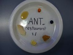 E is for Explore!: Ant Restaurant...would be another cute Science Fair experiment