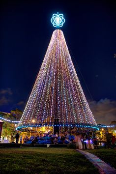 Christmas tree at Victoria Park,  Auckland City, New Zealand