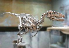 5 Amazing Facts About The Deinonychus Jurassic Park, Jurassic World, Australian Reptile Park, Dinosaur Tattoos, Les Reptiles, Animal Skeletons, Dinosaur Skeleton, Dinosaur Fossils, Extinct Animals