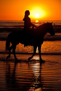 One of my leisure interests is horseback riding. I am currently taking lessons and while I don't have a horse now, I would like to own one after college.