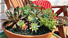 How To Plant Succulents in Containers | Easy-to-plant succulents survive both drought and heat; they practically take care of themselves! Easy-to-plant succulents—from every variety of cacti to medicinal aloe vera—are foolproof picks when it comes to building low-maintenance and eye-catching containers. Because they practically take care of themselves, they're a great choice for gardening beginners and veterans alike. Available in all shapes and sizes, succulents are the ideal plants for…