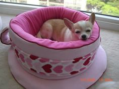 Omg a puppaccino dog bed! Cute Chihuahua, Chihuahua Puppies, Dogs And Puppies, Chihuahuas, Doggies, Animals And Pets, Baby Animals, Cute Animals, Cool Dog Houses