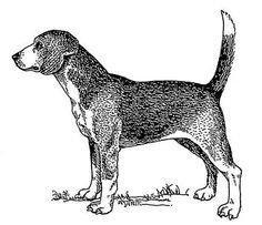 The North Country Beagle, Northern Hound or Northern Beagle was a breed of dog that existed in Britain probably until early in the 19th century. The exact date of its extinction is not known; it is likely that it was gradually interbred with other breeds, particularly the modern Beagle, until the genuine North Country Beagle bloodline ceased to exist.