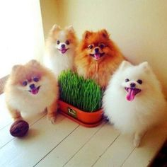 Very interesting post: 52 Dogs Pictures. Also dompiсt.сom lot of interesting things on Funny Animals, Funny Dog.