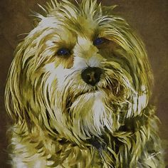 """Mick"" a Lowchen or little Lion Dog by Iain S Byrne"
