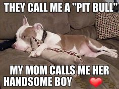 Uplifting So You Want A American Pit Bull Terrier Ideas. Fabulous So You Want A American Pit Bull Terrier Ideas. Beautiful Dogs, Animals Beautiful, Nanny Dog, Dog Rules, Pit Bull Love, Bull Terrier Dog, Thing 1, Puppy Love, Cute Dogs