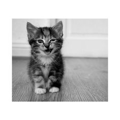 Pinterest / Search results for cats ❤ liked on Polyvore
