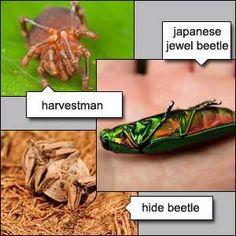 10 Amazing Insect Defensive Tactics