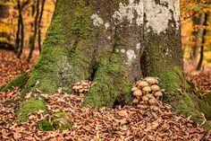 setas, hongos, humedad, tronco, raíz, musgo, liquen, 1705081858
