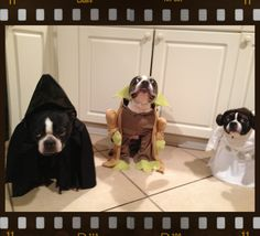 Elvis, Leroy and Holly Pockets -- a Star Wars Halloween